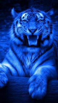 tigers1970