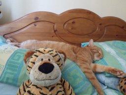 highpeak tiger